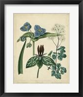 Framed Cottage Florals V