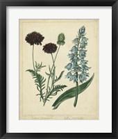 Framed Cottage Florals VI