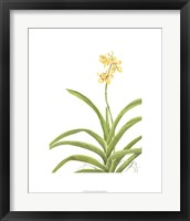 Framed Orchid Study II