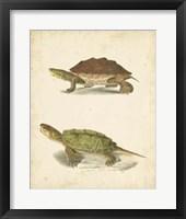 Framed Turtle Duo II
