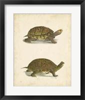 Framed Turtle Duo III