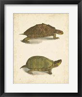 Framed Turtle Duo IV