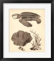 Framed Sea Turtle Study II