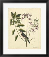 Framed Bird & Botanical I