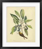 Framed Bird & Botanical V