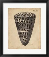 Framed Vintage Diderot Shell I