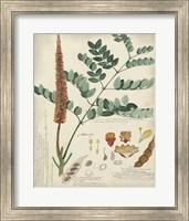 Framed Botanical by Descube II
