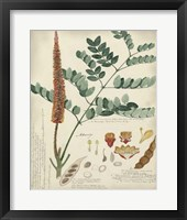 Framed Botanical by Descube II