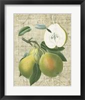 Framed Orchard Medley II