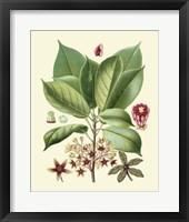Framed Botanical Glory I