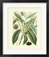 Framed Botanical Glory II