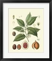 Framed Botanical Glory III