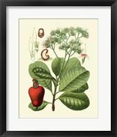 Framed Botanical Glory V
