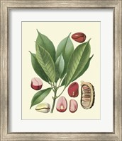 Framed Botanical Glory VI