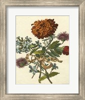 Framed Floral Posy III