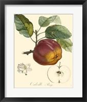 Framed Apples