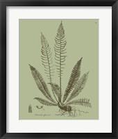Framed Fresh Ferns I