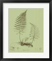 Framed Fresh Ferns II