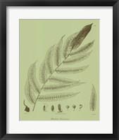Framed Fresh Ferns III