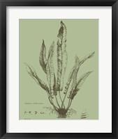 Framed Fresh Ferns IV