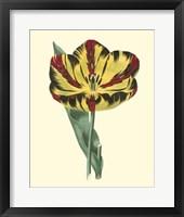 Framed Antique Tulip I