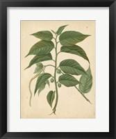 Framed Nature's Greenery II