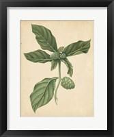 Framed Nature's Greenery III