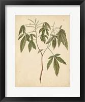Framed Nature's Greenery VII