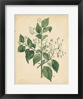 Framed Nature's Greenery VIII