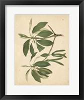 Framed Nature's Greenery IX