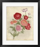 Framed Anemone Florilegium