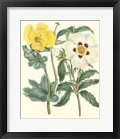 Framed Gardener's Delight III