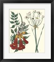 Framed Gardener's Delight VI