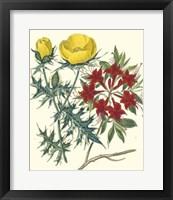 Framed Gardener's Delight VII