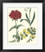 Framed Gardener's Delight VIII