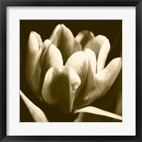 Framed Sepia Tulip I