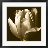Framed Sepia Tulip II