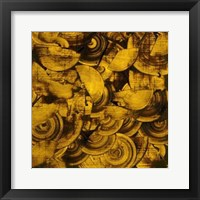 Framed Nautilus in Gold II