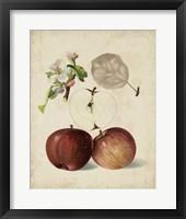 Framed Harvest Apples I