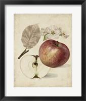 Framed Harvest Apples II