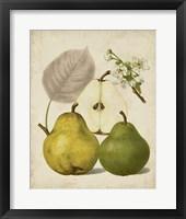 Framed Harvest Pears I