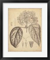 Framed Vintage Curtis Botanical I