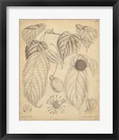 Framed Vintage Curtis Botanical III