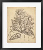 Framed Vintage Curtis Botanical V