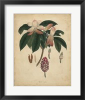 Framed Botanical I