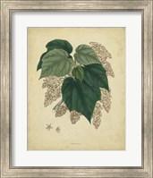 Framed Botanical VII