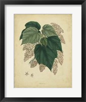Framed Botanical VII
