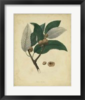 Framed Botanical VIII