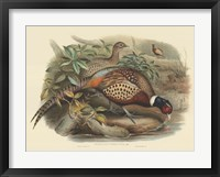 Framed Pheasants I