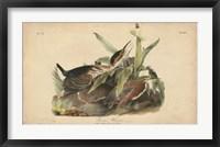 Framed Audubon Green Heron